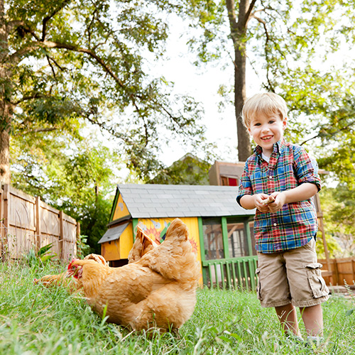 child with chickens in the backyard