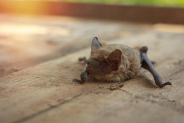 Bat on the ground outside