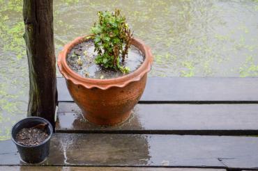 Plant pots on rainy day